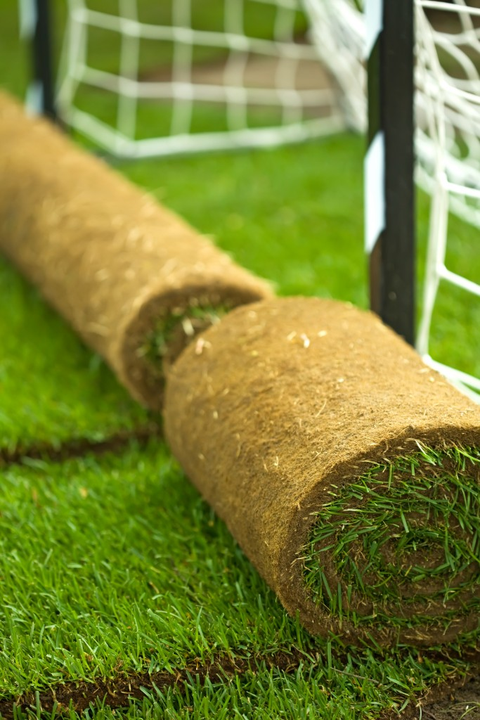 sod on soccer field - turf and hort