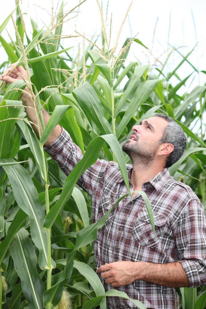 vertical photo of farmer in corn